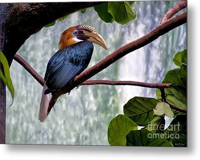 Metal Print featuring the photograph Hornbill In Paradise by Adam Olsen