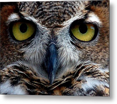 Horned Owl Metal Print