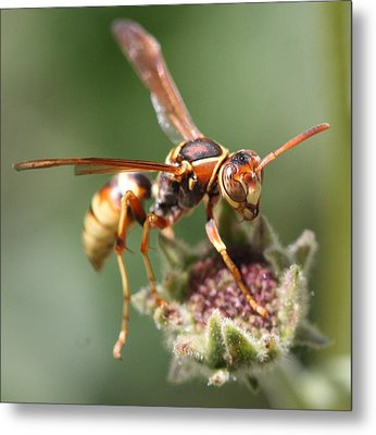 Metal Print featuring the photograph Hornet On Flower by Nathan Rupert