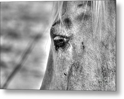 Horse 1 Metal Print by Jimmy Ostgard