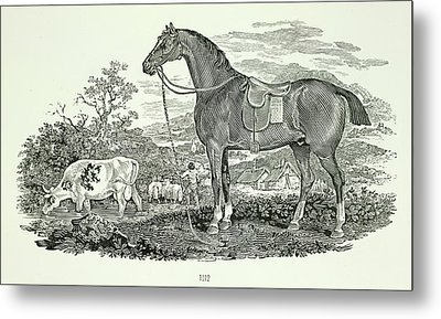 Horse And Cow Metal Print by British Library