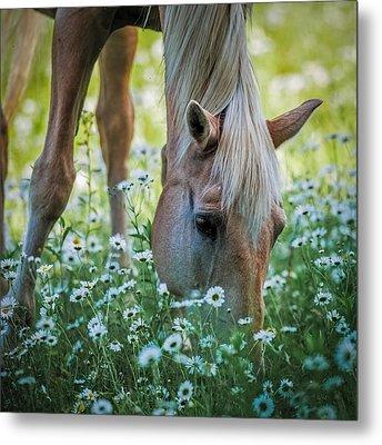 Horse And Daisies Metal Print