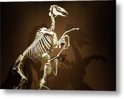 Horse And Human Skeletons Exhibit Metal Print by Jim West