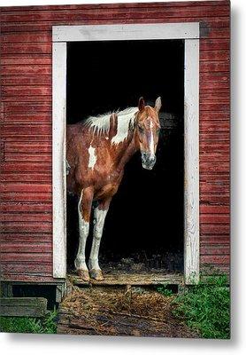 Horse - Barn Door Metal Print by Nikolyn McDonald