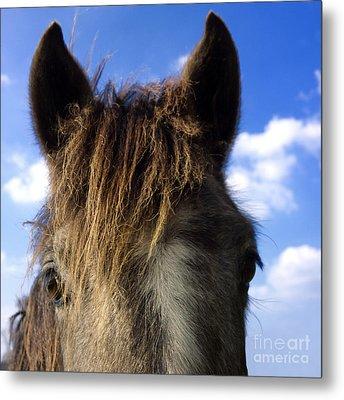 Horse Metal Print by Bernard Jaubert