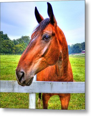 Horse Closeup Metal Print by Jonny D