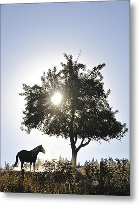 Metal Print featuring the photograph Horse Dreaming Under Tree by Michael Dohnalek