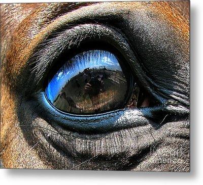 Horse Eye Metal Print by Daliana Pacuraru