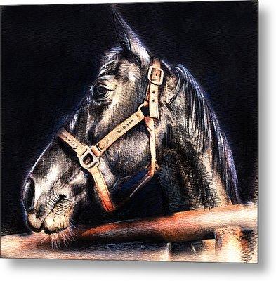 Horse Face - Pencil Drawing Metal Print by Daliana Pacuraru