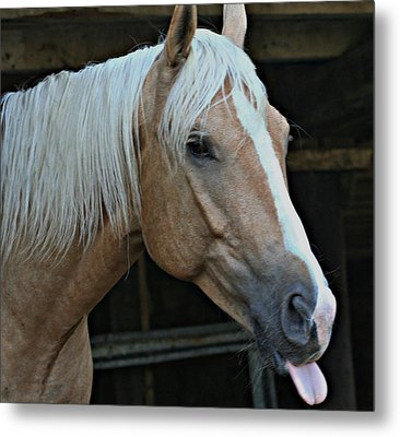 Horse Feathers Metal Print by Barbara S Nickerson