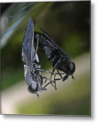 Metal Print featuring the photograph Horse Fly by DigiArt Diaries by Vicky B Fuller