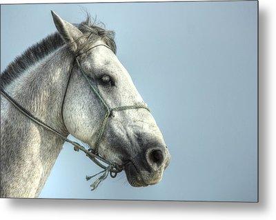Horse Head-shot Metal Print by Eti Reid