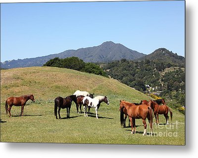 Horse Hill Mill Valley California 5d22672 Metal Print by Wingsdomain Art and Photography