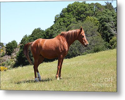 Horse Hill Mill Valley California 5d22683 Metal Print by Wingsdomain Art and Photography