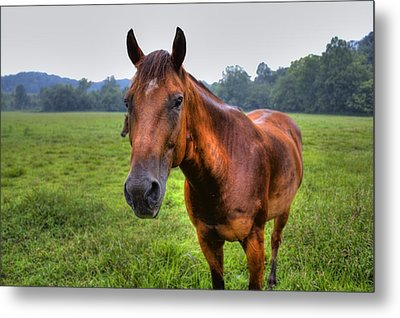 Horse In A Field Metal Print by Jonny D