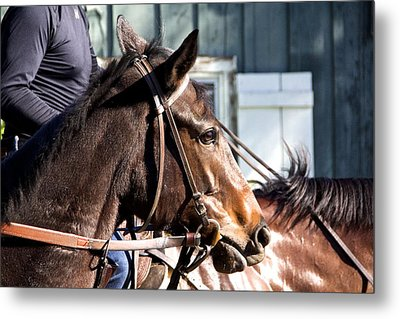 Horse In A Trance Metal Print