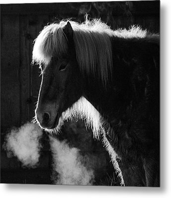 Horse In Black And White Square Format Metal Print