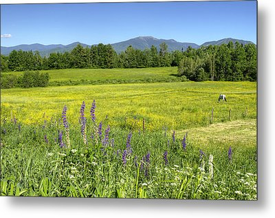 Horse In Buttercup Field Metal Print