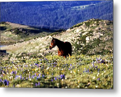 Horse In Mountain Wildflowers Metal Print by Rebecca Adams