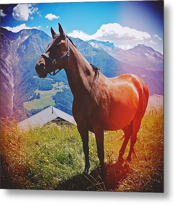Horse In The Alps Metal Print by Matthias Hauser