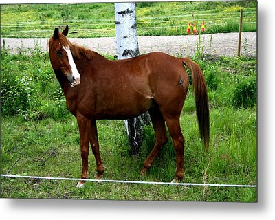 Horse In The Country Side Metal Print
