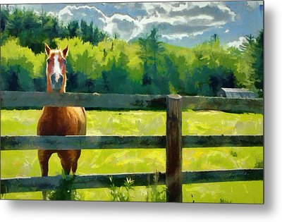 Metal Print featuring the painting Horse In The Field by Jeff Kolker