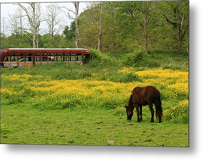 Horse In The Meadow Near Weetamoo Metal Print