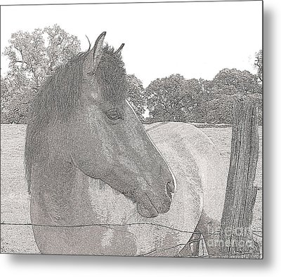 Metal Print featuring the photograph Horse by Irina Hays