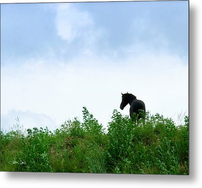 Metal Print featuring the photograph Horse On The Hill by Joan Davis