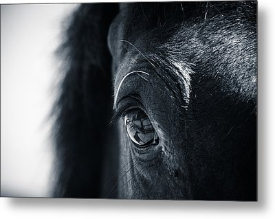 Horse Reflection Metal Print