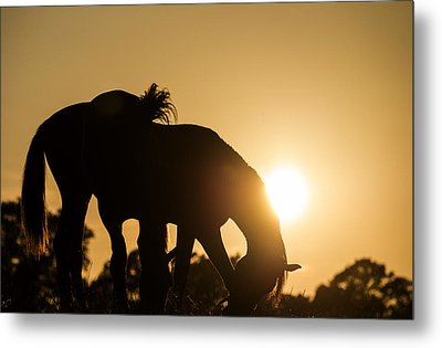 Horse Sunset Metal Print by Michael Mogensen
