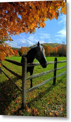 Horse Under Tree By Fence Metal Print by Dan Friend