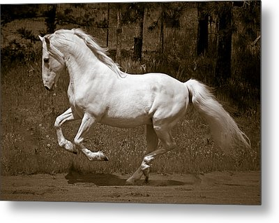 Horsepower Metal Print by Wes and Dotty Weber