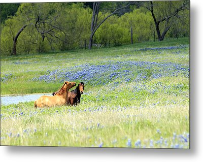 Horses And Bluebonnets Metal Print by Lorri Crossno