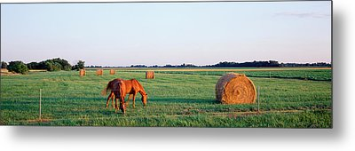 Horses And Hay, Marion County Metal Print by Panoramic Images