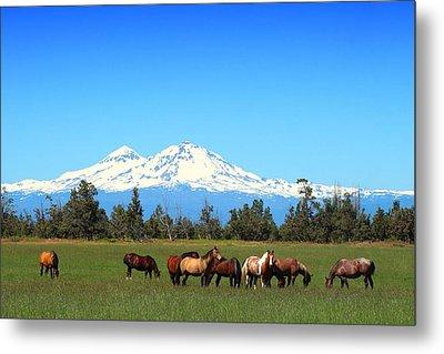 Horses At Sisters Mountain Metal Print