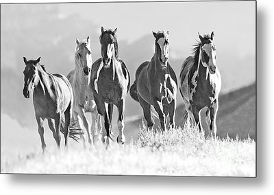Horses Crest The Hill Metal Print by Carol Walker