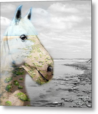 Horses Dream Metal Print by Jo Collins