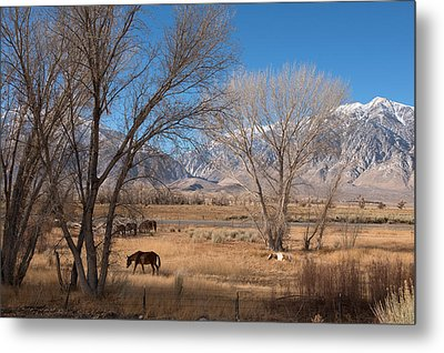 Horses Graze Beside The Owens River Near Bishop Metal Print by Carol M Highsmith