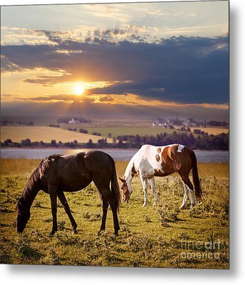 Horses Grazing At Sunset Metal Print by Elena Elisseeva