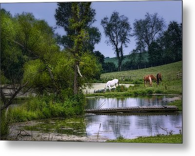 Horses Grazing At Water's Edge Metal Print by Tom Mc Nemar