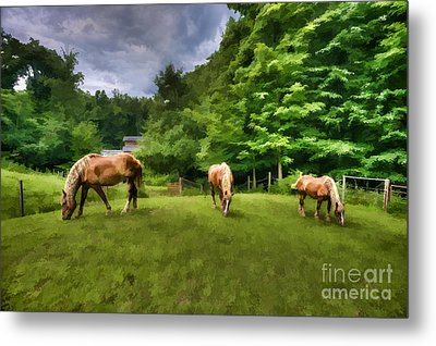 Horses Grazing In Field Metal Print by Dan Friend