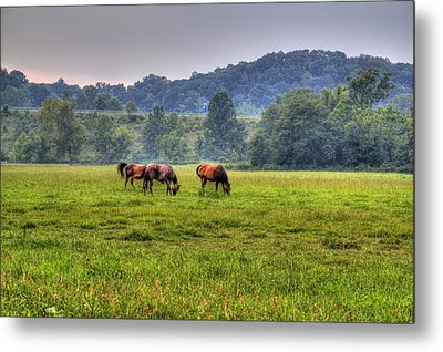 Horses In A Field 2 Metal Print by Jonny D