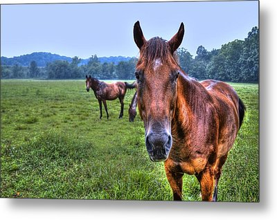 Horses In A Field Metal Print by Jonny D