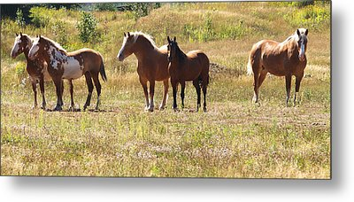 Metal Print featuring the photograph Horses In A Field by Susan Crossman Buscho