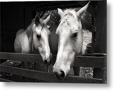 Horses In Black And White Metal Print by Pierre Leclerc Photography