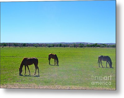Metal Print featuring the photograph Horses In New Mexico by Utopia Concepts