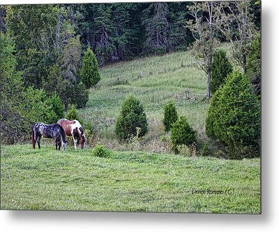 Horses In Summer Metal Print by Denise Romano