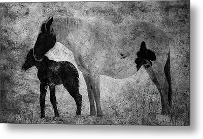 Horses, Mare And Foal  Alberta, Canada Metal Print by Ron Harris