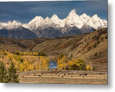 Horses On The Gros Ventre River Metal Print